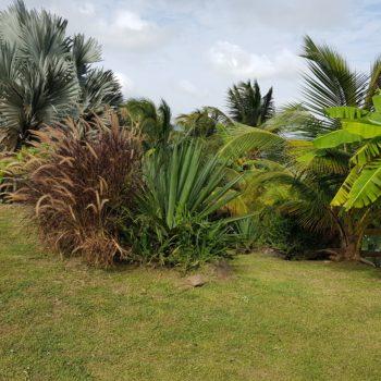 Jardin Diamant Vert Martinique